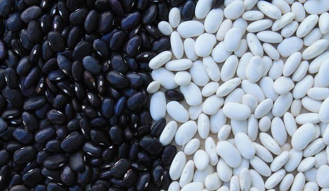 Klíčení fazolí mungo