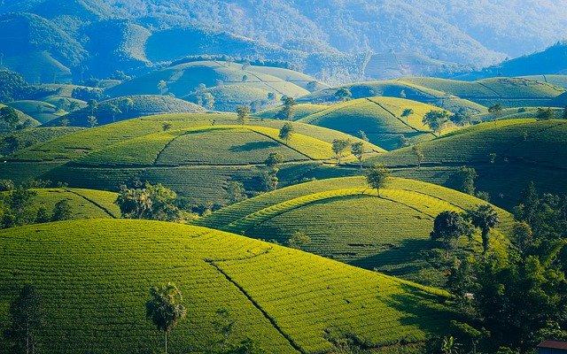 kopce ve Vietnamu